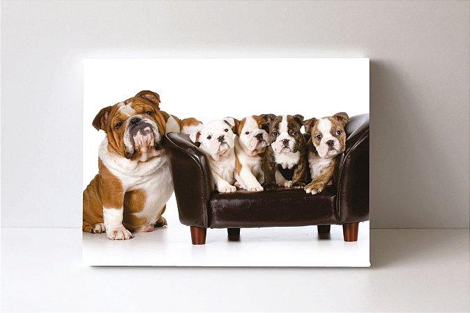 Quadro em Canvas Bulldog