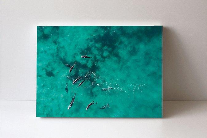 Quadro em Canvas dolphins air
