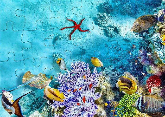 Quebra Cabeça Fundo do Mar