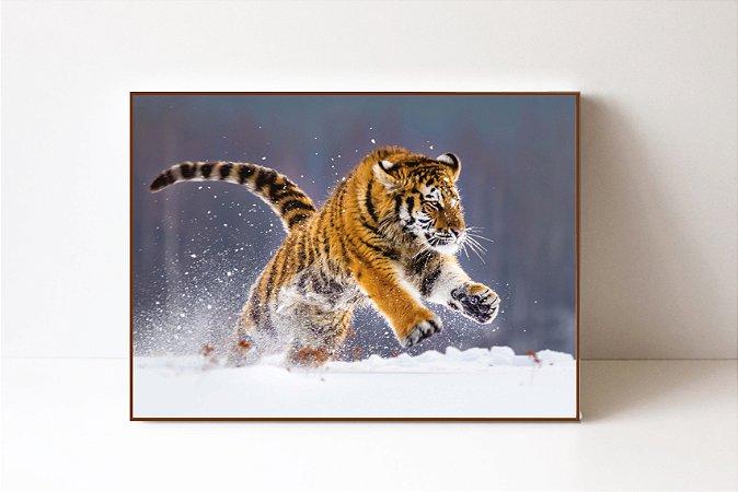 Quadro em Canvas Tigre
