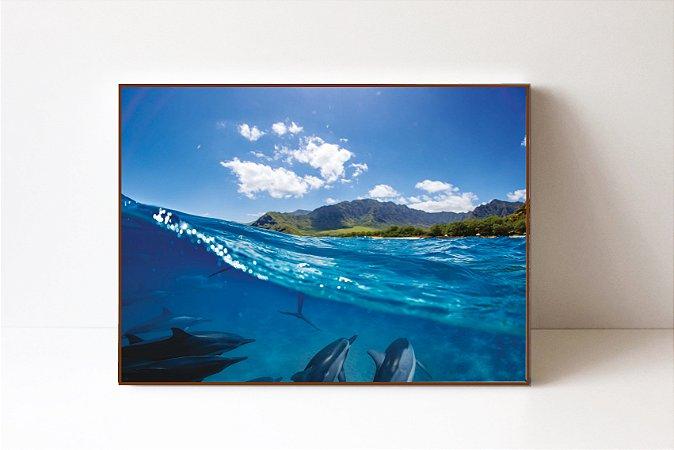 Quadro em Canvas Golfinhos