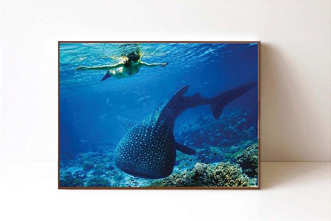 Quadro em Canvas Whale Shark