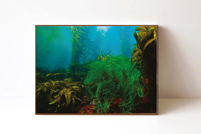 Quadro em Canvas Fundo do Mar