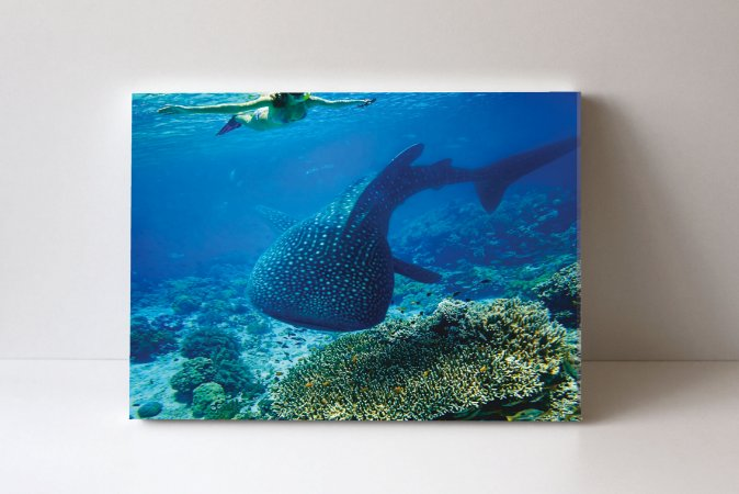 Quadro em Canvas Whale Shark 2