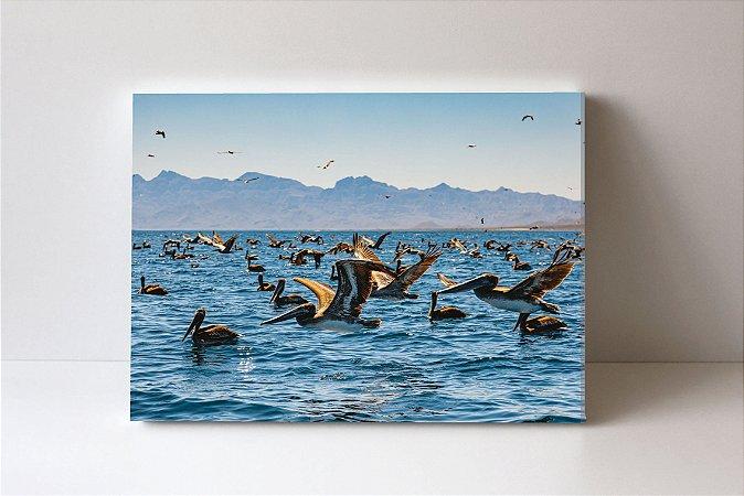 Quadro em Canvas Pelicanos