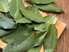 Folhas de Louro Frescas - pct com 10 folhas
