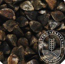 Malte Catarinense Trigo Mourisco 10kg