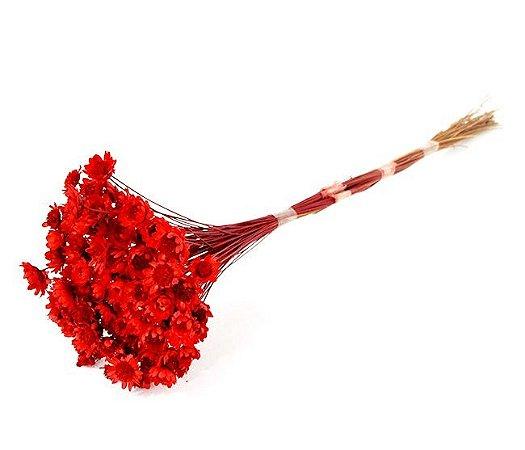 Ramo Sempre-Viva Vermelha