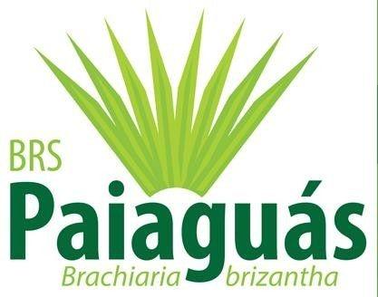 Brachiaria brizantha cv. BRS PAIAGUÁS - Revestido - CAMPEÃO DE PRODUTIVIDADE NO PERÍODO DA SECA - (Embalagem 12 kg) - Preço por kg: R$ 13,25