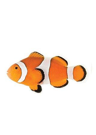 """Peixe-Palhaço """"Comum"""""""