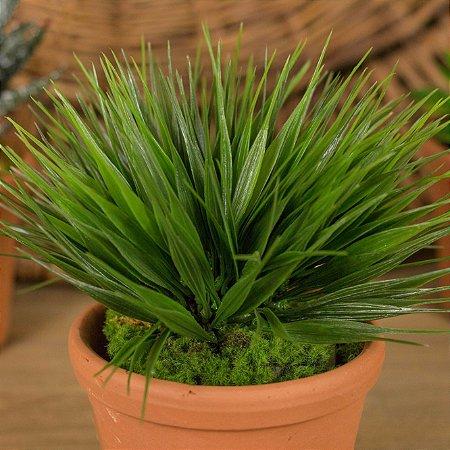 Mini Yucca No Vaso de Cerâmica