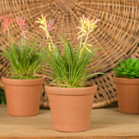 Mini Orquídea  No Vaso de Cerâmica