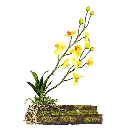 Orquídea Phalaenopsis com Tronco