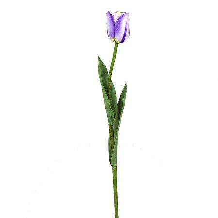 Galho De Tulipa