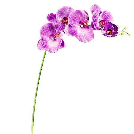 Galho de Orquídea Phalaenopsis