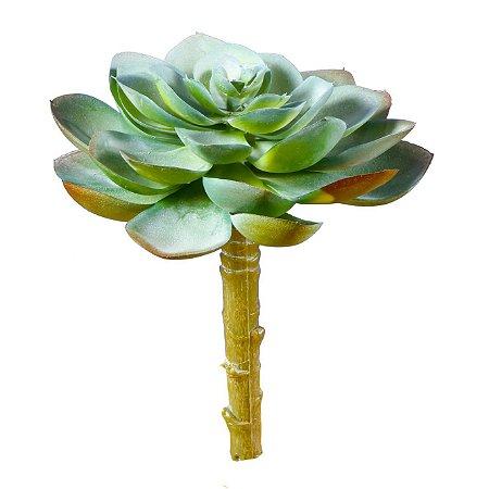 Suculenta Flor De Pedra