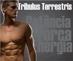 Tribulus Terrestris 500 mg