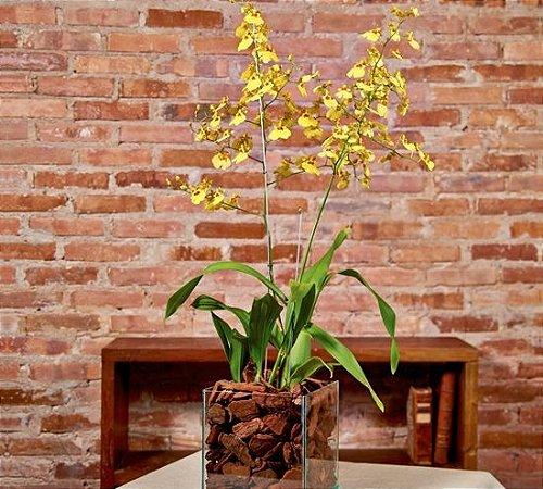 Orquídea Oncidium em base de vidro