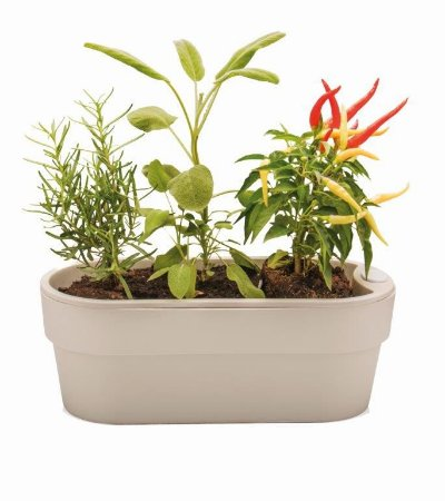 Jardineira Auto Irrigável Hortinha Cor Bege