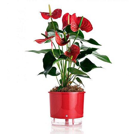 Vaso Auto Irrigável Raiz N01 Vermelho Mini 9x10