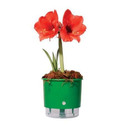 Vaso Auto Irrigável Raiz N02 Verde Pequeno 12x11