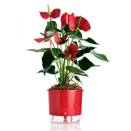 Vaso Auto Irrigável Raiz N02 Vermelho Pequeno 12x11