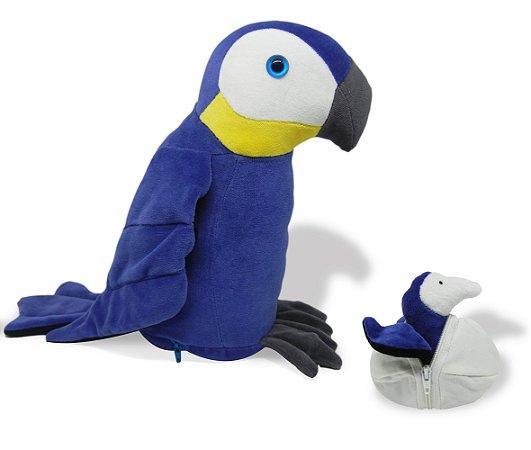 Arara Azul Grávida
