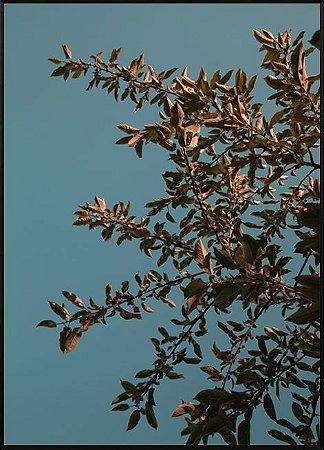 Fotografia Nature