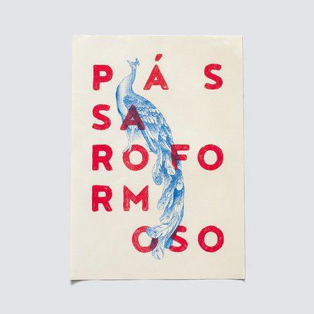 Poster Passaro Formoso