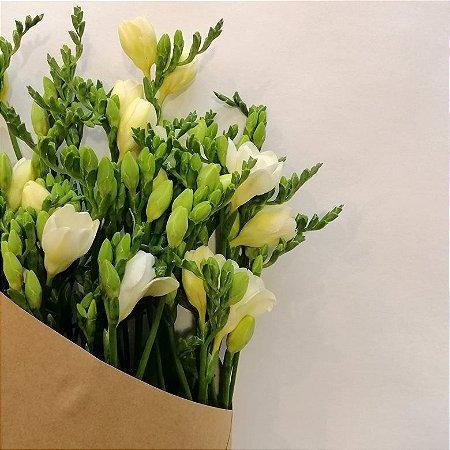 Flores de Época - FRÉSIAS