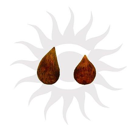Fava de Pichuli - Pacote 30g