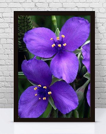Poster Com Moldura - Flor Lilás