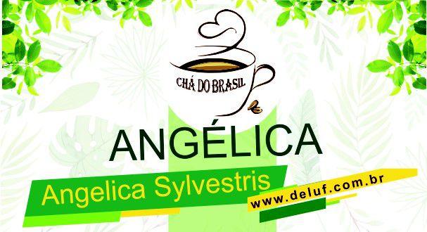 Angélica - Angelica Sylvestris - 250 grs - Cha do Brasil
