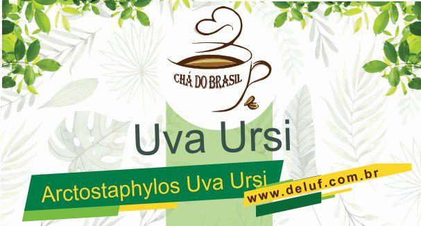 Uva Ursi- Arctostaphylos Uva Ursi - 250grs - Chá do Brasil