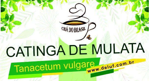 Catinga de Mulata - Tanacetum Vulgare - 250 grs - Cha do Brasil