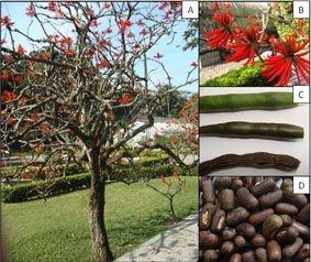 Mulungu (Erythrina mulungu) 100g em pó