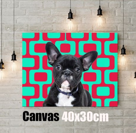 Q!Pet Canvas Premium 40x30cm