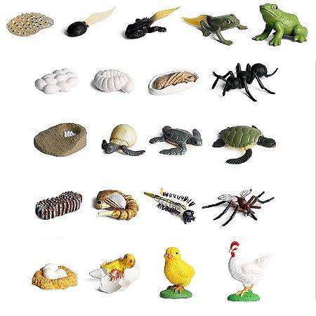 Miniaturas ciclo de vida para atividades Montessori de Pareamento
