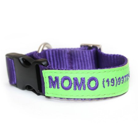 Coleira de Identificação para Cachorro- Roxo e Verde Neon