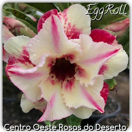Muda de Enxerto - EggRoll - Flor Dobrada Amarela Matizada