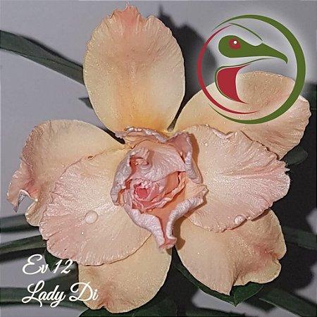 Muda de Enxerto - EV-012 - Lady Di - Flor Tripla