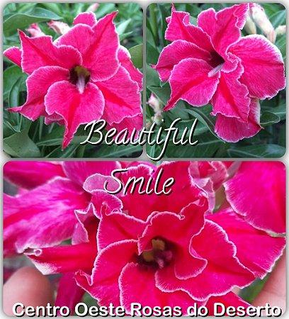Muda de Enxerto - Beautiful Smile - Flor Dobrada IMPORTADA