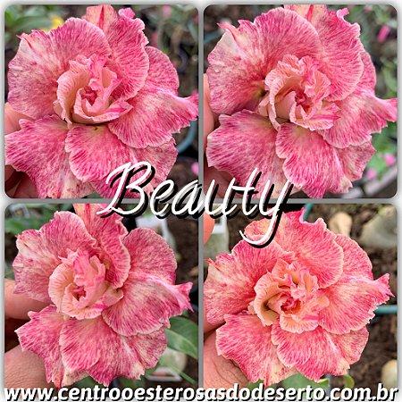 Muda de Enxerto - Beauty (RC101)- Flor Dobrada Importada