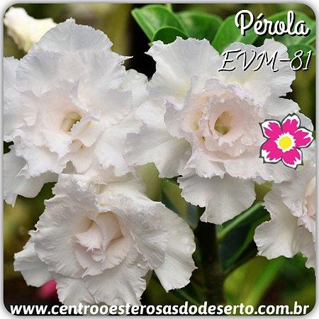Muda de Enxerto - EVM-081 - PÉROLA - Flor Tripla