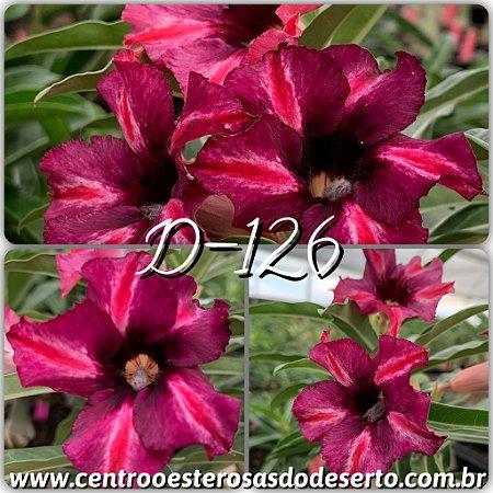 Muda de Enxerto - D-126 - Flor Simples