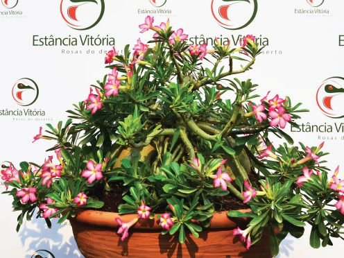 Muda de Sementeira Pendente Cuia 21 - Flor Simples