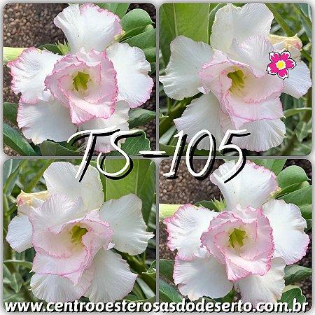 Muda de Enxerto - TS-105 - Flor Dobrada