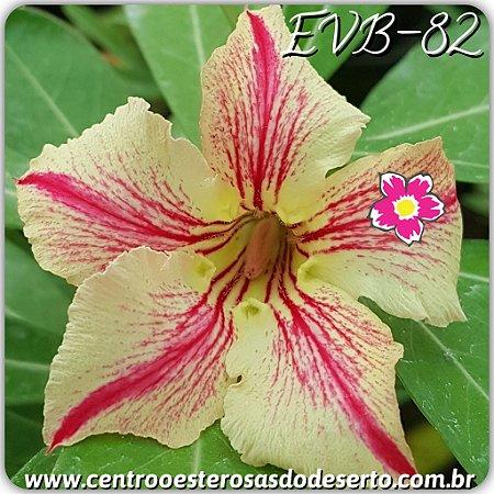 Muda de Enxerto - EVB-082 - Flor Simples