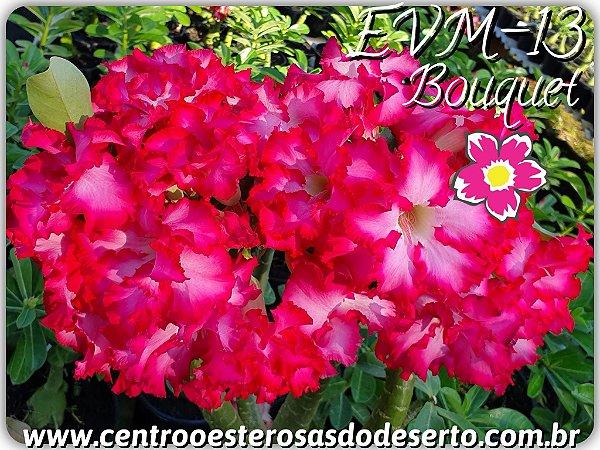 Rosa do Deserto Muda de Enxerto - EVM-013 - Flor Dobrada - Bouquet