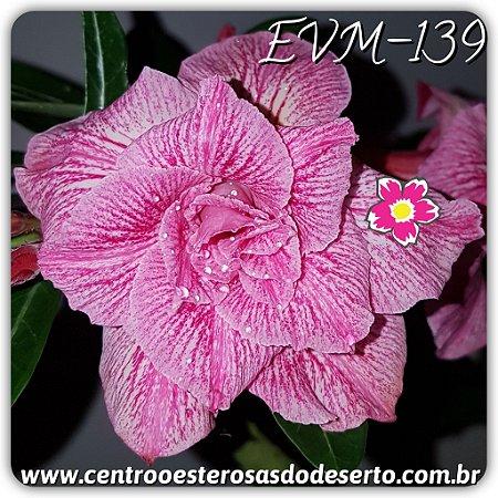Rosa do Deserto Muda de Enxerto - EVM-139 - Flor Tripla